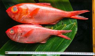伊豆近海産・金目鯛の煮付け